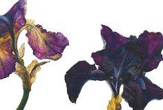 Rosie Sanders   Botanical Artist   Page 11