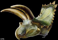 Imposing: An artist's impression of the armored dinosaur Coahuilaceratops - dailymail.co.uk