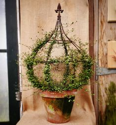 Muehlenbeckia complexa for you sticklers. If I didn't get this in by midnight, I was going wait until Fleur-… Topiary Garden, Garden Planters, Indoor Garden, Topiaries, Love Garden, Garden Art, Garden Design, Flower Planters, Flower Pots