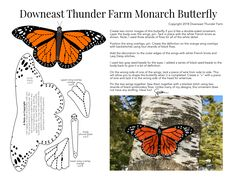The Magnificent Monarch Butterfly from Downeast Thunder Farm
