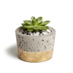 A beautiful pot made from concrete, hand painted with paint sealant and a gold finish. Absolutely perfect for planting seeds and watching...