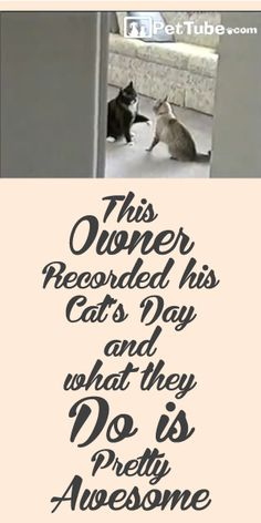 This Owner Recorded His Cat's Day  And What They Do Is Pretty Awesome