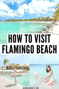 In this post, I'll explain how to visit Flamingo Beach Aruba. You'll learn how to get there, the cost, and how to take photos with the flamingos! #flamingobeach #visitaruba #aruba #caribbean | Flamingo Island Aruba | Beautiful places in Aruba | Instagrammable places in Aruba | Renaissance Aruba Resort & Casino | Renaissance Aruba Private Island | Flamingos in Aruba