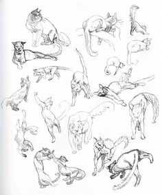 Animal Drawings Academy of Art Character and Creature Design Notes: Character Design Cat Anatomy, Anatomy Drawing, Cat Drawing, Life Drawing, Animal Anatomy, Animal Sketches, Animal Drawings, Art Sketches, Drawing Animals