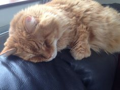 Benny's afternoon cat nap