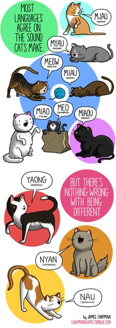 """Most languages agree on the sound cats make. (to add: In Mandarin Chinese, the word for cat is """"mao,"""" and it is also the sound they make)"""