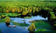 Angiang, Vietnam - Tra Su Cajuput Forest