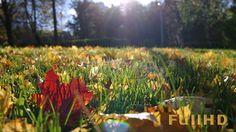DOWNLOAD :: https://vectors.work/article-itmid-1005829660i.html ... Autumn Grass Field ...  autumn, beam, field, foliage, forest, garden, grass, lawn, leaves, ray, sun, sunbeam, sunset, wind, yellow  ... Templates, Textures, Stock Photography, Creative Design, Infographics, Vectors, Print, Webdesign, Web Elements, Graphics, Wordpress Themes, eCommerce ... DOWNLOAD :: https://vectors.work/article-itmid-1005829660i.html