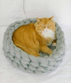 Check out this item in my Etsy shop https://www.etsy.com/listing/546123256/sale-cat-bed-merino-wool-cat-cave-100