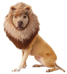 Lion Dog Costume - Dog Costumes This would be cute on my German Shepherd ♥