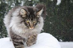 Afbeelding van http://beheer.uwhondenkat.nl/pictures/news/20100417-3.jpg.