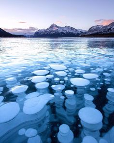 """It looks like another planet but it's actually beautiful frozen methane bubbles trapped in a frozen Abraham Lake. 