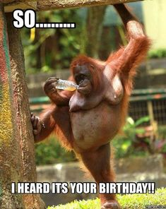 Funny animal memes (part This. - Funny Monkeys - Funny Monkeys meme - - Funny animal memes (part This. The post Funny animal memes (part This. appeared first on Gag Dad. Humor Animal, Funny Animal Memes, Funny Animal Pictures, Funny Animals, Baby Pictures, Baby Animals, Funniest Pictures, Funny Pictures With Captions, Funny Captions