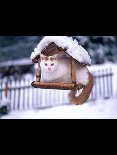 #CAT##ANIMALS##SNOW##CUT##FUNNY#