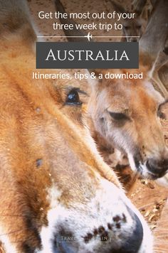 Get the Most out of Your Three Week Trip to Australia: three different itineraries, vital tips and a free download