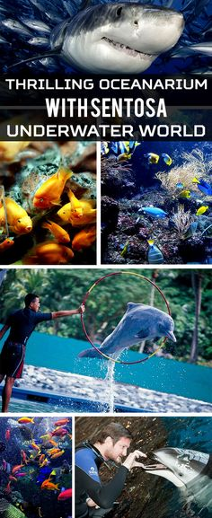 Sentosa Underwater World - Singapore Trip