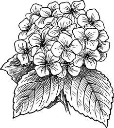 Flor, Florescente, Planta, Folhas, Costas E Branco