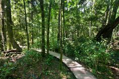 Forest path Knysna, Forest Path, Forests, Biology, Paths, Country Roads, World, Woodland Forest, The World