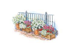 Container Garden Plans