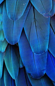 Gorgeous blue feathers