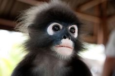 Ez a majom nem tud betelni a kiskutyákkal! Animals And Pets, Monkey, Nature, Playsuit, Monkeys, Naturaleza, Scenery, Pets, At Sign