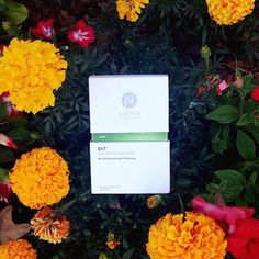 Got your Green? Nerium EHT with patented green tea extract for optimal brain health!  #nerium #EHT www.tdrousche.nerium.com