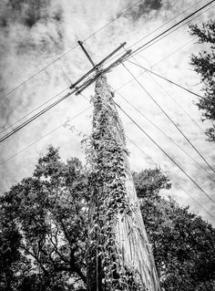 Pole Position - There was something about this telephone pole covered in Ivy which caught my eye