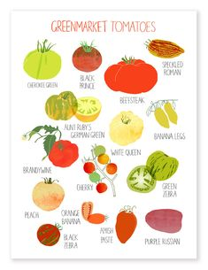 Claudia Pearson - Greenmarket Tomatoes