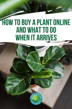 How to Buy a Plant Online and What to Do When It Arrives Are you looking to buy your next houseplant Tropical Garden Design, Vertical Garden Design, Amazing Gardens, Beautiful Gardens, Front Garden Landscape, Fiddle Leaf Fig Tree, Australian Garden, Landscaping Plants, Landscaping Borders