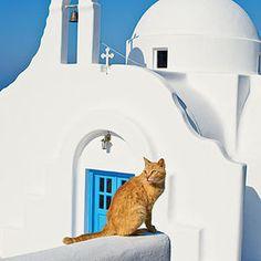 Mykonos, Greece Cats < Mykonos, Greece - Coastal Living