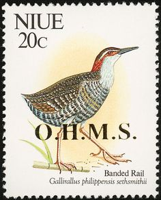 Buff-banded Rail stamps - mainly images - gallery format