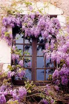 Resultados de la Búsqueda de imágenes de Google de http://www.arlingtoncameraclub.org/wp-content/uploads/2011/07/Window_Flowers.jpg