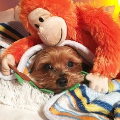 Remove this creepy red monkey from me....NOW