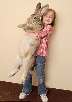 I want one of these giant bunnies!