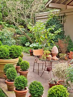 Give your patio an edge with a wall of plants. Stagger pots along the ...