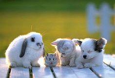 Puppy, cat, hamster, bunny