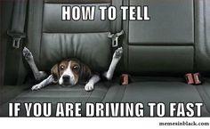 Driving fast | MemesInBlack | Memes in black