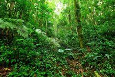 Tropischer Regenwald Landschaft Stockfoto - 12985103