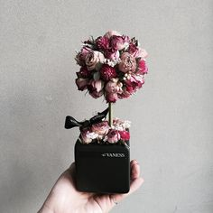 : 진정 너네들도 드라이된 꽃이라니라니 미니토피어리로 만드니까 온몸으로 귀여움을 표현중 . #바네스플라워#논현동꽃집#플라워샵#플라워카페#꽃다발…