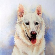 This is Bea, a white German Shepherd. I love doing pet portraits! Watercolor