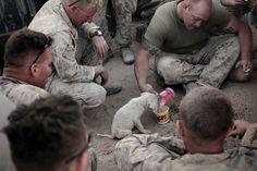 Voici 29 soldats et animaux domestiques qui sont devenus amis pour la vie! - Trop Cute et mignon
