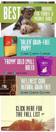 Top Nutrition Small Breed Puppy Food