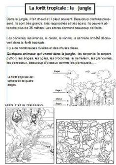 Découverte du monde CP et CE1: lAfrique et ses paysages - Vero à lécole