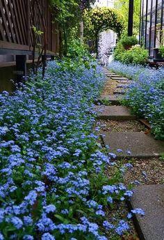 普通の花が主役になる! | ようこそブルーガーデンへ - 楽天ブログ