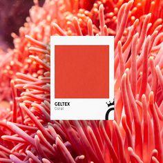 Bucear en una playa de agua transparente y encontrar un #coral de color intenso... ¿lo has visto alguna vez o te puedes imaginar esa sensación? ¡Con este #Geltex sin duda puedes transmitirla! Coral, Colours, Texture, See Through, Rich Colors, Aqua, Beach, Patterns