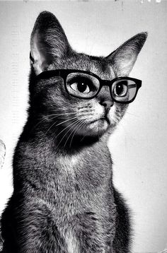 Win 10 bucks to Young's Restaurant by showing us your studious cat!