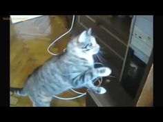 """FUNNY VIDEOS  Funny Cats   Funny Fails   Funny Animals   Cat Funny Videos - http://positivelifemagazine.com/funny-videos-funny-cats-funny-fails-funny-animals-cat-funny-videos-6/ http://img.youtube.com/vi/PT58OauX5ks/0.jpg  ***Get your free domain and free site builder*** [matched_content] ***Get your free domain and free site builder*** Please follow and like us:  var addthis_config =   url: """""""",  title: """""""""""
