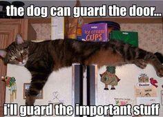 The dog can guard the door...I'll guard the important stuff.