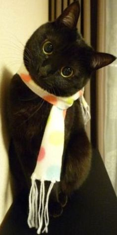 My scarf adds color to my face, don't you think?!