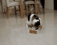 This cat who decided to grab a tissue real quick. | 27 Cats That Immediately Regret Their Decisions